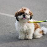 Hilfe! Mein Hund hat Kaugummi gefressen – was tun?